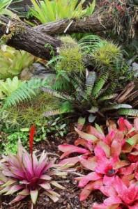 bromeliad-display